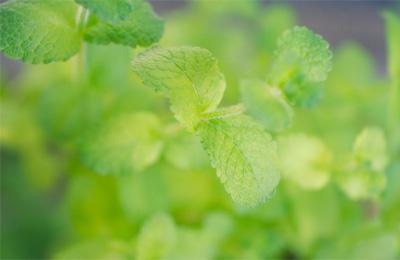 sejarah pengobatan herbal